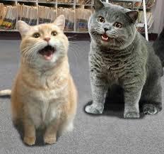 Happy Cat Meme - happy cats cat meme dumpster pinterest