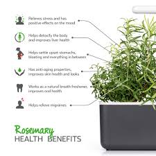 rosemary growth refill for indoor herb garden click u0026 grow