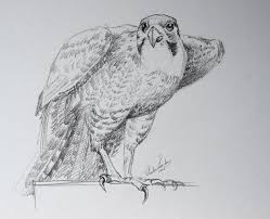 drawing bird video lesson drawing academy drawing academy