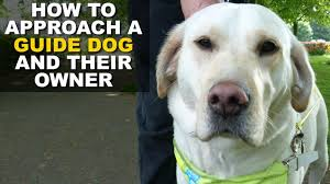 Blind Dog And His Guide Dog Shop Owner Told Blind Man To Leave Because He Was U0027extremely