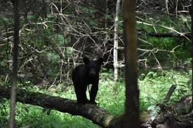Tennessee wildlife tours images Tennessee mountain tours pigeon forge gatlinburg jpg