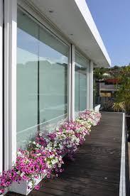 pflanzen f r balkon pflanzen fr balkon und garten in der blumen pflanzen balkon