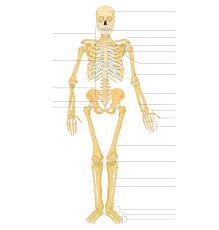 Halloween Skeleton Names Skeleton Wiktionary