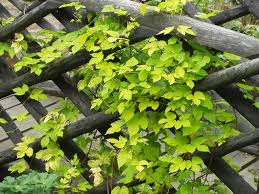 looking after climbing plants alan newbould