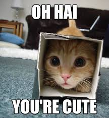 Funny Kitten Meme - oh hai you re cute camouflage kitten quickmeme