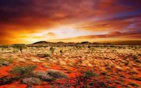 old spinifex rings little sandy desert australia wallpapers red desert hd nature wallpapers for mobile and desktop