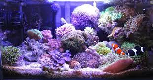 Floating Aquascape Reef2reef Saltwater And Reef Aquarium Forum - fluval edge reef my insatiable fluval edge members aquariums
