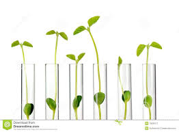 small plants in test tubes royalty free stock photography image