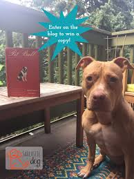 american pitbull terrier book myths and misconceptions bronwen dickey changing the conversation