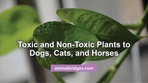 toxic and non toxic plants to dogs cats and horses