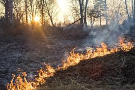 media welcome to austin air forest fires still a major threat