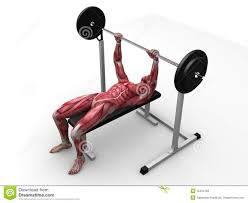 male workout bench press stock photography image 15434762