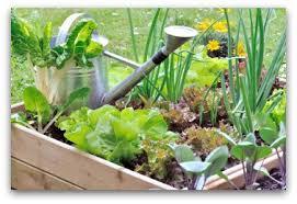 small vegetable garden layout gardening ideas