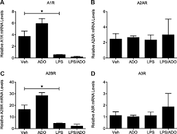 protective effect of adenosine receptors against