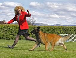 belgian sheepdog national specialty dog show 2012 04 15