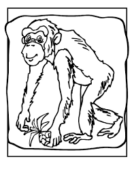 coloring pages chimpanzee coloring page mycoloring free