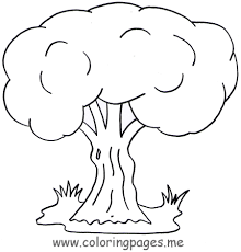 41 tree coloring pages uncategorized printable coloring pages