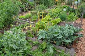 pacific northwest vegetable gardening 28 images how to grow a