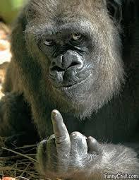 Gorilla Meme - meme creator middle finger gorilla meme creator