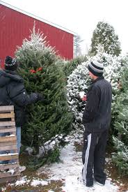 buy christmas tree where to buy christmas tree coach for more clarity about
