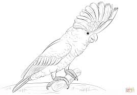white cockatoo coloring page free printable coloring pages