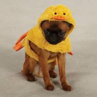 Halloween Dog Costume Dog Halloween Costumes Funnyfur