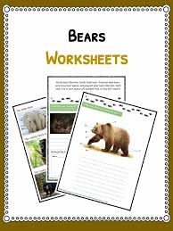 grizzly bear facts information u0026 worksheets for kids