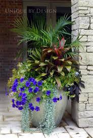 pots in gardens ideas kangaroo paw bush pearl best australian native plants for pots and