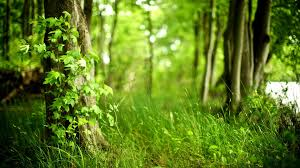 awesome spring forest pic spring forest wallpapers