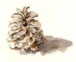 121 best pinecone art images on pinterest watercolor paintings