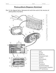 photosynthesis diagram worksheet biology photosynthesis