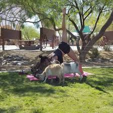 about us goat yoga las vegas