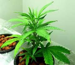 best hps grow lights how to choose the best hps grow lights led grow lights judge