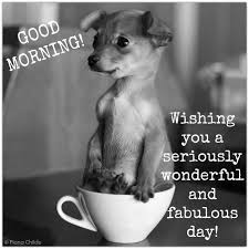 Cute Good Morning Meme - amazing cute good morning memes with wishes images hump day