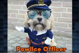 Pet Halloween Costumes Cute Dog Halloween Costumes On The Tonight Show