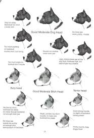 american pit bull terrier vs american staffordshire terrier home