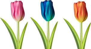 tulips flowers tulips flowers free vector 24 301 free vector