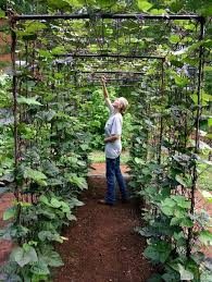 Best  Backyard Vegetable Gardens Ideas On Pinterest Vegetable - Designing your backyard