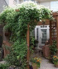 kletterpflanzen fã r balkon die besten 25 weiße pergola ideen auf outdoor