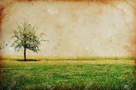 vintage background with tree stock photo picture and royalty free