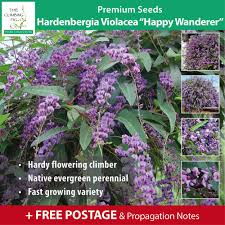 evergreen vine u0026 climbing plant seeds ebay