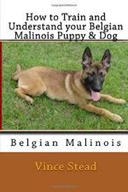 belgian shepherd new york how to train and understand your belgian malinois puppy u0026 dog