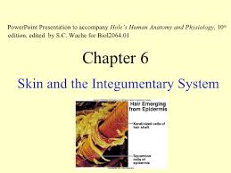 Holes Human Anatomy And Physiology 13th Edition Ch6 Ppt Lect