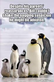 Cute Penguin Meme - funny adopted cat penguin meme picture funny joke pictures