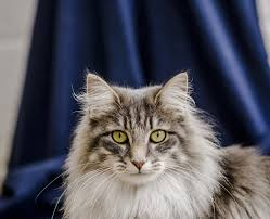 cats and ticks how to spot and remove ticks from cats blue cross