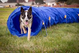 Backyard Agility Course How To Create A Dog Agility Course At Home Mnn Mother Nature