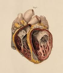 25 trending medical illustration ideas on pinterest medical art
