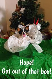 92 best puppy in a pot images on pinterest puppys corgis and
