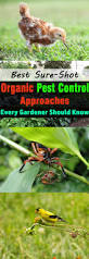 Gardening Pest Control - best sure shot organic pest control approaches every gardener