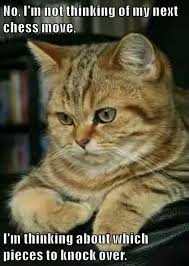Thinking Cat Meme - thoughts lolcats lol cat memes funny cats funny cat